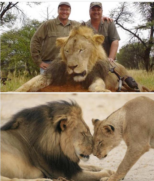 Do you feel like more of a man after killing a beautiful creature like this?! Heartbroken