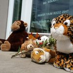 Memorial for Cecil the lion spotted outside hunter's office http://t.co/2HxYpXVPeJ http://t.co/lAwxv4JmLM