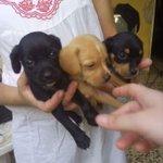 23 cachorros abandonados en un vertedero como el que deja fruta podrida. URGE ADOPCION Y RT http://t.co/BOTf0hkqDK