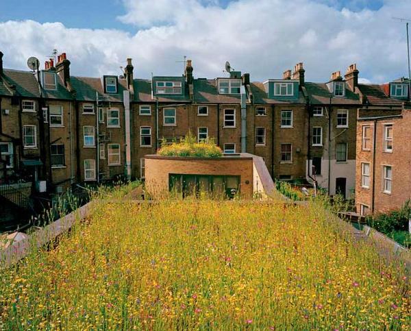 Hoe #stimuleren we #duurzaamheid op daken? Oa door b(l)boeiende voorbeelden te delen...  @bosw8erameland @AatdeJonge http://t.co/p2Cv4zHM5V
