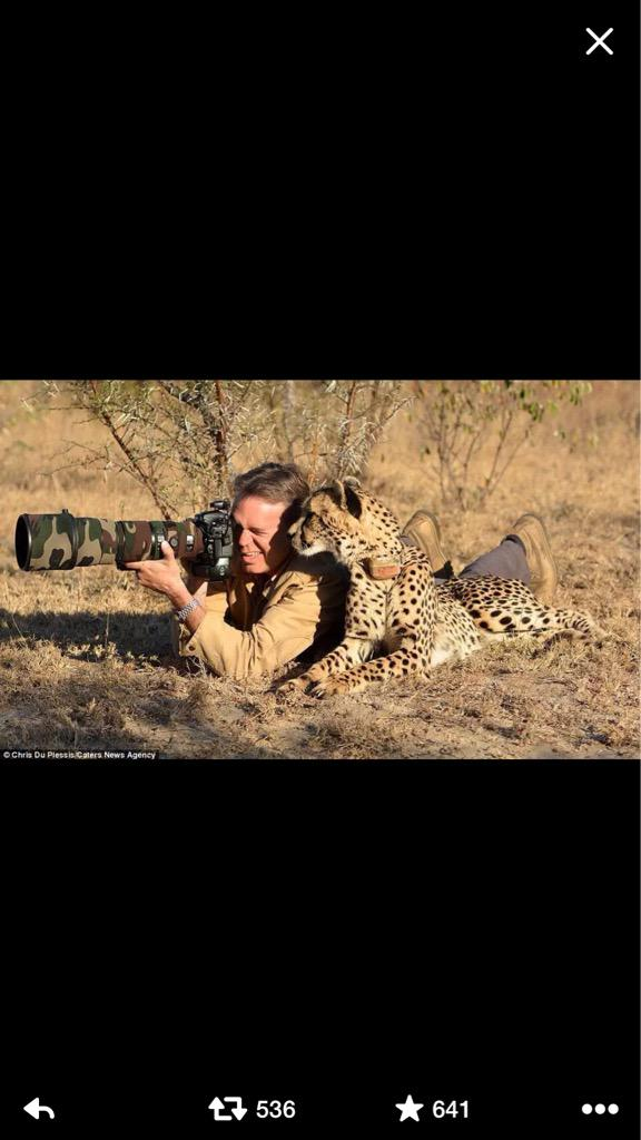 This is how real men shoot wildlife, #cowards #BanBigGameHunting #CecilTheLion http://t.co/BRkm4Y7qp1
