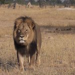 Jimmy Kimmel Chokes Up on Air Over #CecilTheLion, Likens Hunter to Bill Cosby http://t.co/jEjqdJ09Qj http://t.co/WHgGWBPvsE