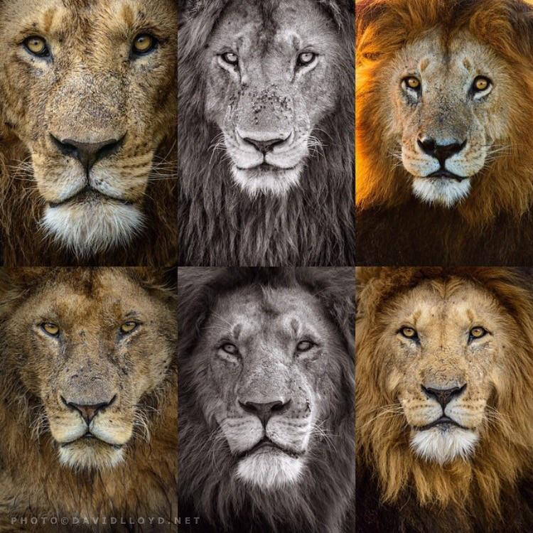 Have a look at this then try tell me there's no emotion, sentience or compassion in these faces #CecilTheLion http://t.co/6sUyKVMRwI
