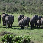 2 arrested after five elephants killed in Tsavo http://t.co/WaSK6WCqte #SaveTheElephants http://t.co/qItUgGbKe8