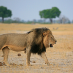 #CecilTheLion: Zimbabwean hunter and farmer appear in court http://t.co/Go94R6EYTJ http://t.co/ajsfOke8g6