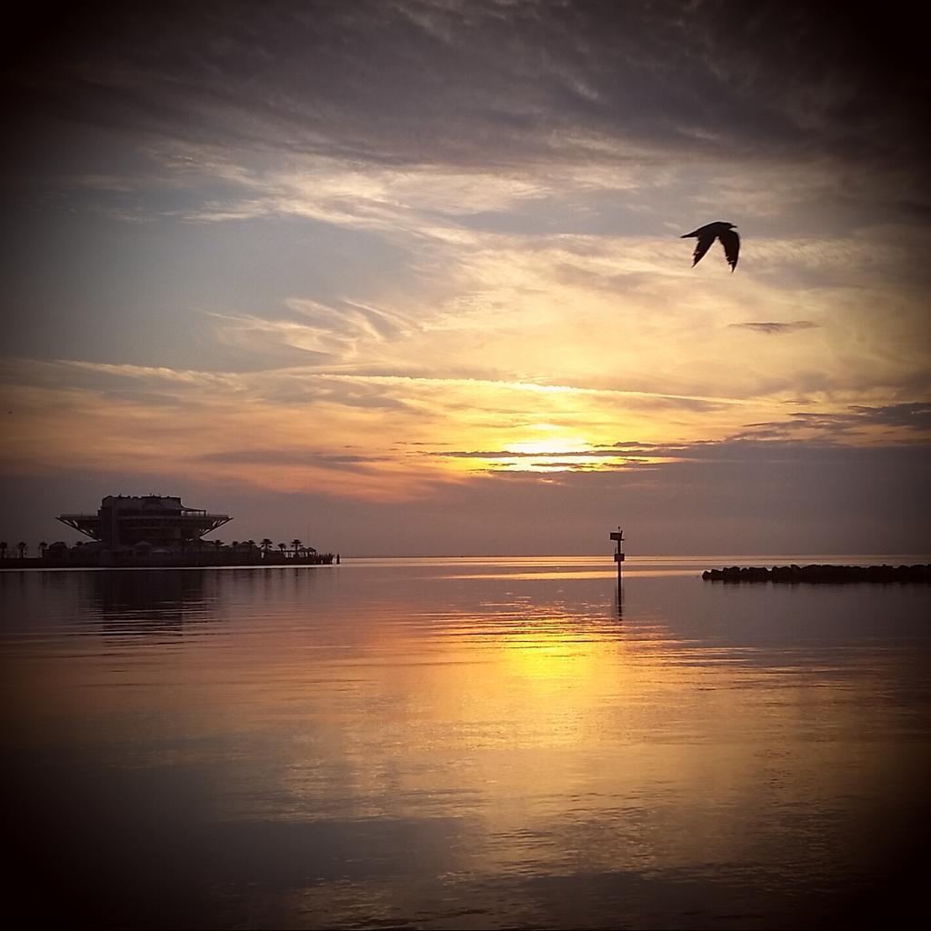Good morning! Gull at sunrise today at St. Pete, FL pier. @ShareALittleSun @VSPC #sunrisephoto http://t.co/pRPezXcZku