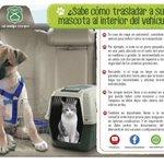 Aquí te enseñamos cómo llevar a tu mascota en vehículo. Compártelo con tus contactos: http://t.co/TWGPi9OQOc