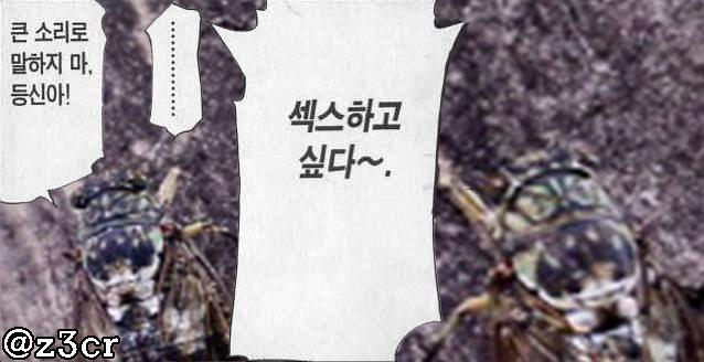 매미소리 시끄럽다고 욕하지 마라 http://t.co/i9hFD1e4vL