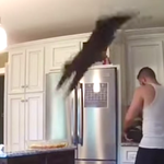 Watch this jerk cat straight-up destroy its owner's chicken dinner and laugh and laugh. http://t.co/FU9NrnDoGl http://t.co/NS8zYcjVTj