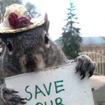 This college student dresses up squirrels in costumes. We hope she washes her hands after. http://t.co/p3zAbNwO25 http://t.co/Gy3iJD2Yyp