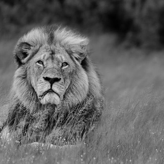 There are moments when humanity impresses me beyond words...and times it devastates me to no end... #RIPCecilTheLion http://t.co/PsBnWaFaw7