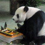Panda é acusada de forjar gravidez para ganhar mais comida. http://t.co/a5arczjqAB http://t.co/g7gWIekedB