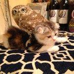 Coruja e gato que são amigos viram atração em café de Osaka; veja fotos http://t.co/bfzqfb3OAe #G1 http://t.co/zixMzFgN9H