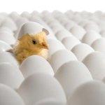 RT CCI_entreprises: L'#incubateur corporate est à la mode en France http://t.co/BNxdTIK76u Bpifrance #pepiniere … http://t.co/P1qDrjAbda