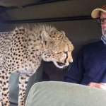 """RT @louistheroux: """"Im looking for Walter Palmer."""" http://t.co/It1eXHPBLy"""