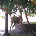 Managed to sneak past this lovely lady without disturbing her lunch. #myTRU #kamloops http://t.co/vDktCR93qo