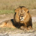 US officials want dentist who admitted to killing #CecilTheLion to contact them immediately. http://t.co/SxRZ8zlUAT http://t.co/OAJ5mH2M7N