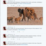 Lmao. This dude is awesome. Spot on impression. #AllLionsMatter http://t.co/Vs4HaqnhxM