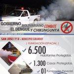 #CombateAlDengue   6.500 habitantes protegidos en sector San José #MunicipioGIRARDOT. @TareckPSUV @NicolasMaduro http://t.co/0fMPuTpKpe