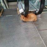 Этот кот - гений http://t.co/i8wW9ql88r
