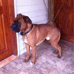 Este lindo perrito llegó a mi casa, si lo reconoces contáctame.. #Coyhaique http://t.co/4uxeHpqBaG