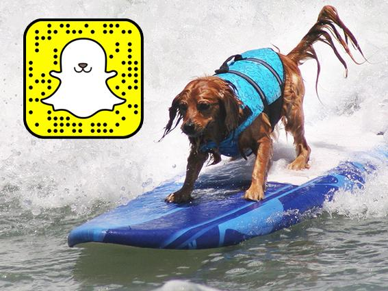 Ready for #SurfDogUnleashed? Follow UnleashedPetco on Snapchat for all day coverage on Saturday! http://t.co/YQ4OEPfT2w