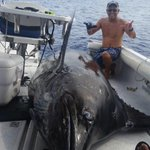 Thats a HUGE fish! Man catches Marlin that weights 1,368 pounds! (via Waiopai Sport Fishing Charters/Facebook) http://t.co/4F5HiwPVPi
