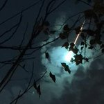 #Meteorito o meteoro o bólido, pero mágico http://t.co/9wpQzNqQeI