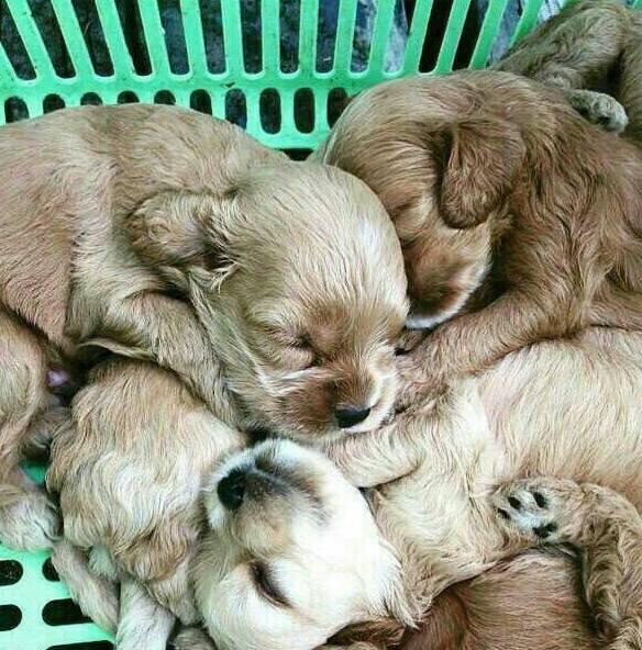 <拡散希望>京都動物愛護センターに電話したら、譲渡はしてません。と面倒くさそうに…この子達はどうなるの? http://t.co/7cgF14BJMr