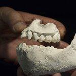 【新着ブログ】「ルーシー」の近くで発見された新種の初期人類化石 http://t.co/j6jma4Ok1c http://t.co/z0jJes6SZc