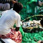 Qatar ministry imposes temporary fishing ban on dwindling kingfish http://t.co/5MfmcYNTkX http://t.co/16Z4FoFwKO