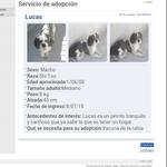 Lucas perro de 8 años busca una nueva familia en #Madrid Ctto 622 88 01 74 Quieres conocerlo? http://t.co/vXsHBRCE4B