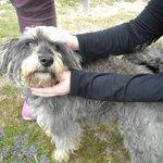 Hooper perro de 5 años busca una nueva familia en #Madrid Ctto 622 88 01 74 Quieres conocerlo? http://t.co/qj3gF3RvmM