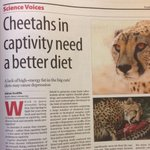 My article in the @mailandguardian #sciencevoices Thanks @sarahemilywild for much needed help in writing this! http://t.co/HRRZS58v50