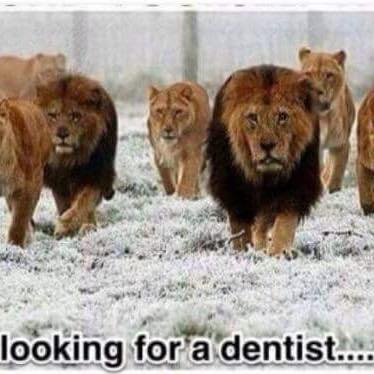 Looking for a dentist.. http://t.co/2Zz0ujAdvw