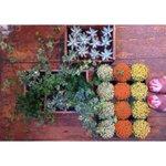 Friday plant love ???? #Fridayfeeling #independent #shoplocal #florist #broomhill #Sheffield #sheffildissuper http://t.co/QUiwn6mFMQ