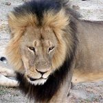 Zimbabwe calls for US hunter to be extradited over #CecilTheLion death http://t.co/XHvjOM2LtW http://t.co/k8EIzBsJjU