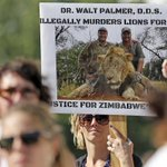 Killing of Cecil the lion triggers probe by US agency: source http://t.co/Nj0BUKJsYg http://t.co/16o7rovKMu
