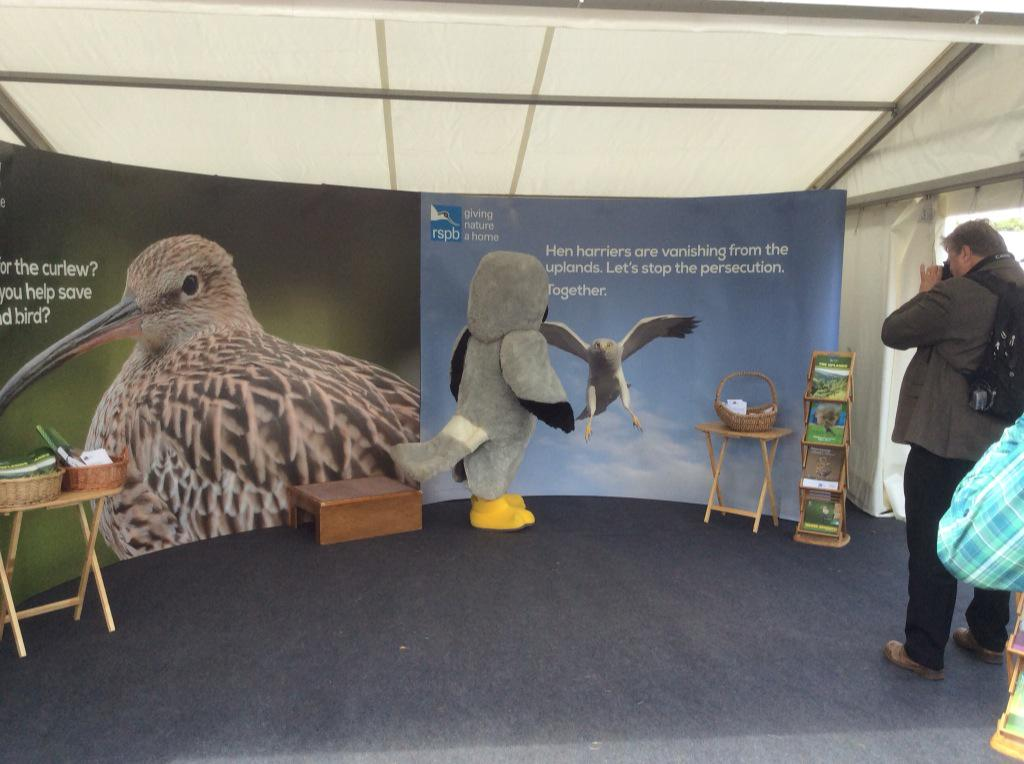We've had a visitor to our @TheGameFair stand, #highfive for harriers. @HenryHenHarrier http://t.co/RLM92WEgci