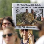Zimbabwe calls for extradition of American dentist who killed #Cecil the lion: http://t.co/TgAlJyvjAF http://t.co/MwaMBpVVeh