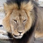 An official in Zimbabwe calls for the extradition of the dentist who killed Cecil the Lion http://t.co/UiuxowatcS http://t.co/ZlIUKjunV0