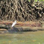 #Panamá lidera proyecto de Reservas de Carbono en Manglares http://t.co/LEz3l3NGrP @criticapa @MiAmbientePma http://t.co/YEogT78qQY