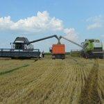Сбор зерновых идёт в большинстве районов Тульской области. Ждём хорошую погоду! http://t.co/IJN1rcNyy3