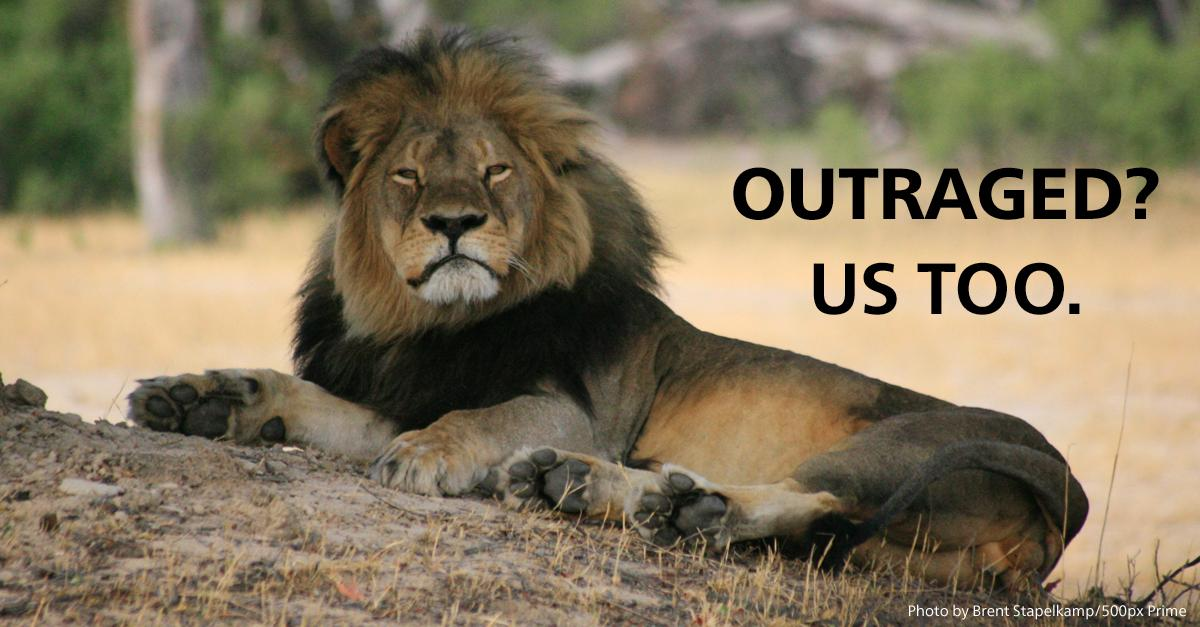 It's time. Shut down trophy imports  of all lions to the US. RT if you're with us. http://t.co/oll6eSbkE9 http://t.co/voiNRZKhuC