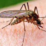 #WestNileVirus rears its ugly head in #Mississauga after #mosquito batches test positive http://t.co/WIPZ0LxnJW http://t.co/DrbgyE3tYH