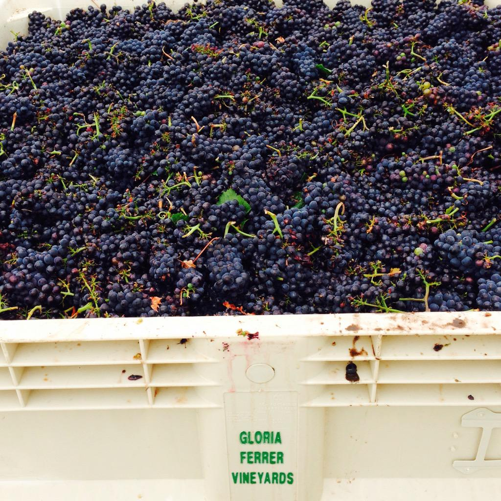 2015 HARVEST HAS BEGUN!