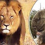 Zimbabue pide a EEUU la extradición del cazador del león Cecil http://t.co/ZqXIx1Ya9X http://t.co/jFoBJTgOeK