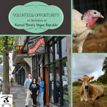 #Volunteer in #Berkeley at our specialty #vegan shop and support @Animal_Place Contact christy@animalplace.org http://t.co/VDgXgtbOQv
