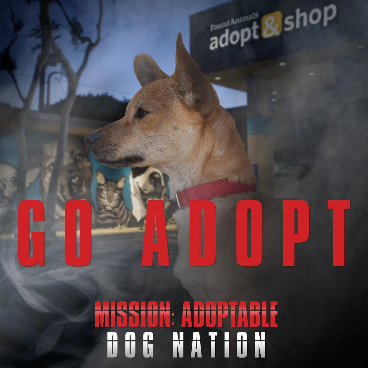 Help end euthanasia by choosing to adopt your next pet! #MissionAdoptable Join Dog Nation: http://t.co/yo9B8SKK91 http://t.co/s2gDaqrZGm