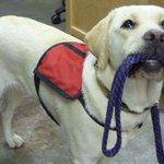 В СКР пообещали найти собаку-поводыря незрячей москвички http://t.co/lV9lqZHXWr http://t.co/1x53MheGuv